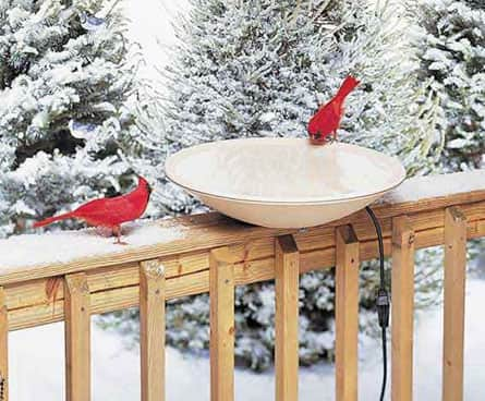 cardinals at a birdbath in winter