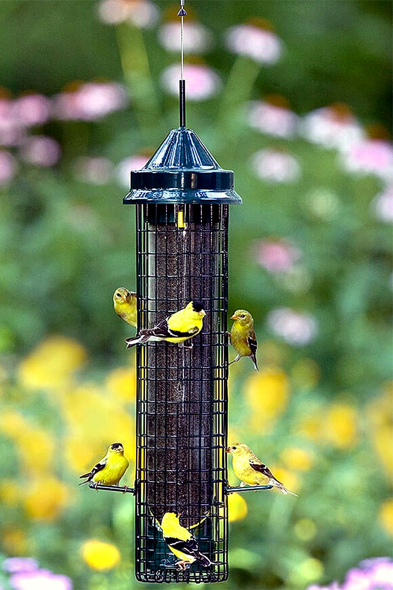 goldfinch at a busy feeder