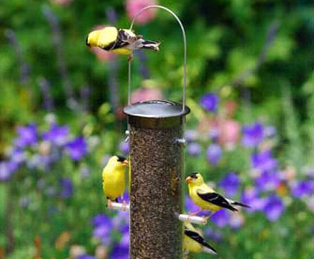 goldfinches love thistle feeders