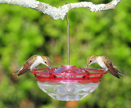 tiny little hummingbird feeder