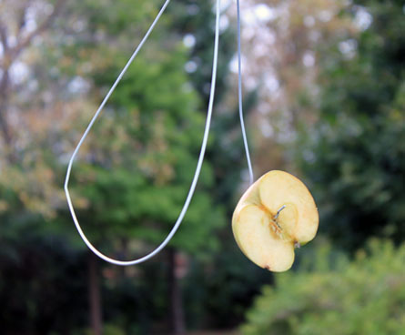 easy DIY bird feeder with fruit