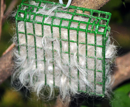 dog fur in a birds nest