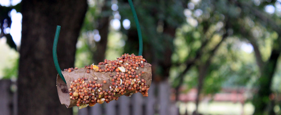 DIY bird feeder idea