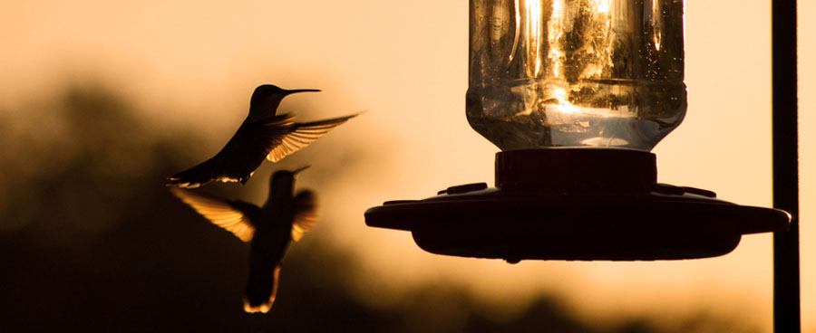 hummingbird feeder at sunset
