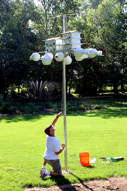 hanging up a purple martin house
