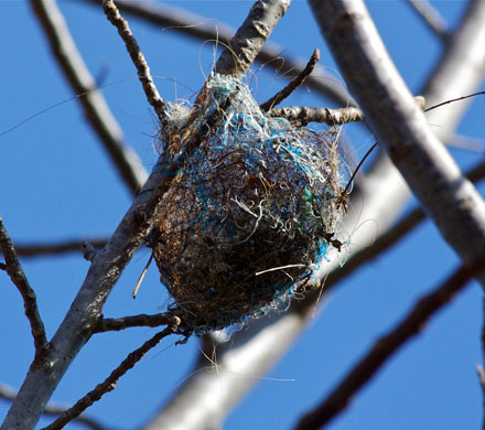 colorful bird nest made of string