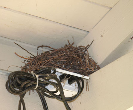birds nest on electrical outlet