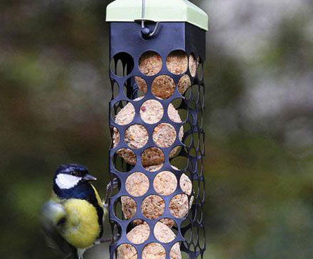 bird eating round suet balls