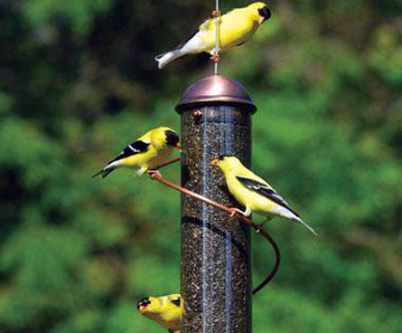 busy bird feeder with finches