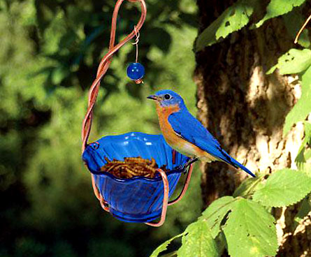 bluebird eating mealworms from a feeder