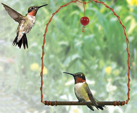 hummingbirds wait for a turn at feeder