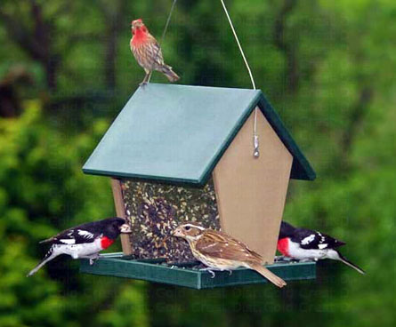 bird feeder with lots of birds