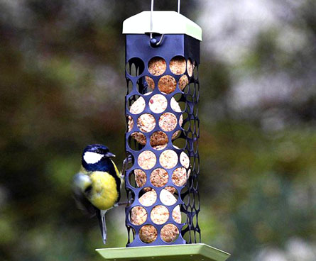 suet ball feeder with titmouse