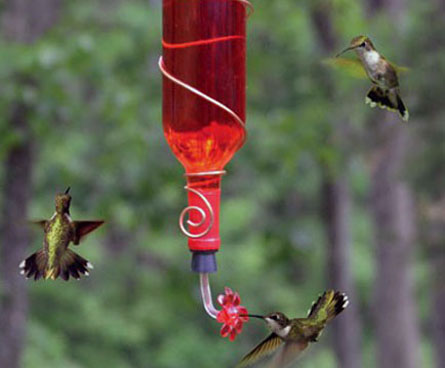 hummingbird feeder made from wine bottle