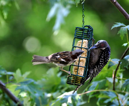 big and small birds on feeder