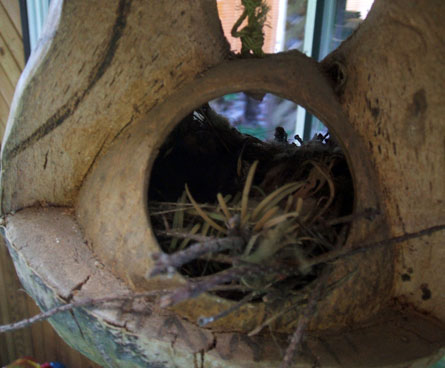 unwanted nest from a wren bird