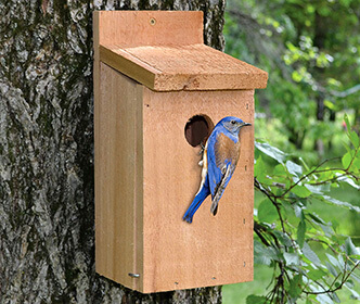 Bluebird Bird Houses