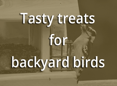 Tasty treats for backyard birds