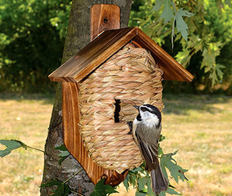 Songbird Bird Houses