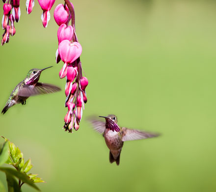 20 Ways to keep hummingbirds coming back