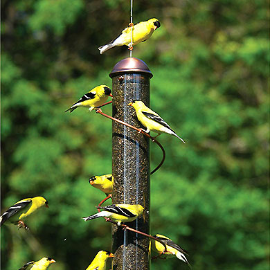 Feeders and food