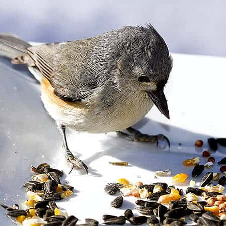 Seeds, Suet & Food