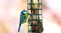 Seeds, Suet, & Food
