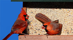 Attracting Cardinals