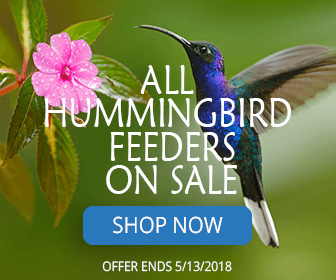 All hummingbird feeders on sale!