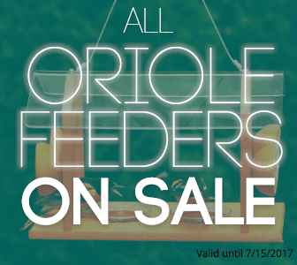 All Oriole Feeders on Sale!