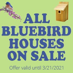 All Bluebird Houses on Sale