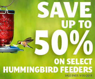 Select Hummingbirds Feeders Up To Half Off!