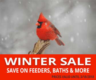 WildAboutBirds.com Winter Sale