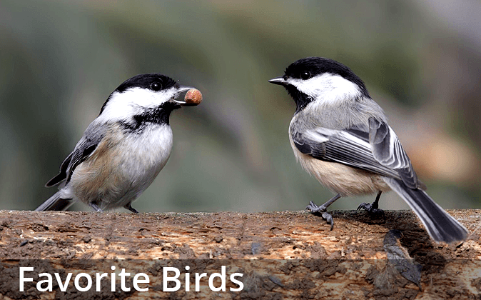 Favorite Birds