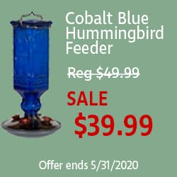 Cobalt Blue Square Hummingbird Feeder 50% Off