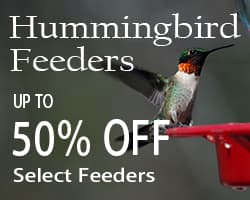 Hummingbird Feeder Sale at WildAboutBirds.com