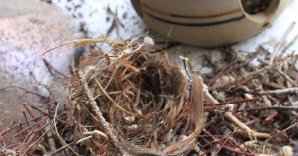 How to clean out a bird house