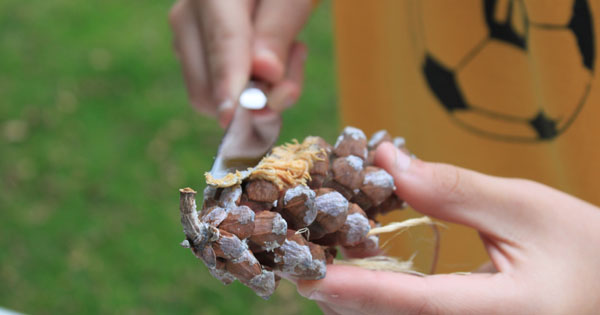 DIY Bird feeders kids can make