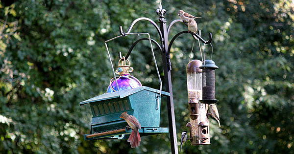 Choosing the right bird food & feeder