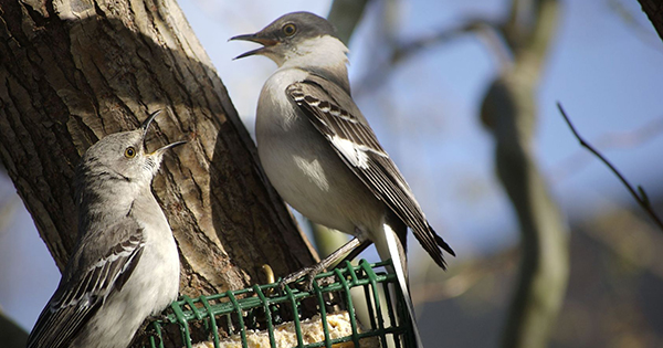 Suet vs. Seed Feeders