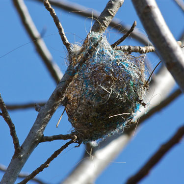Helping birds with nest building