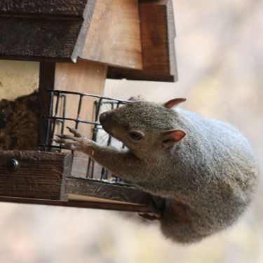 How to squirrel-proof bird feeders